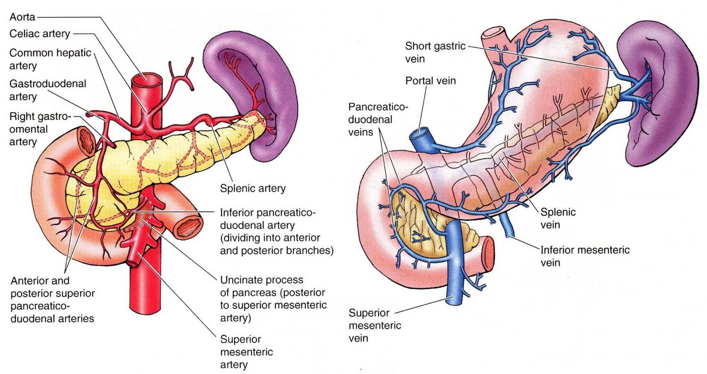 ischemic pancreatitis   DAILYEM